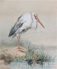 a stork by a river by henry stacy marks