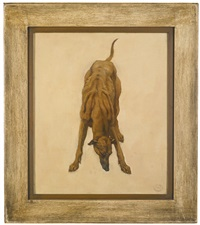 a study of a greyhound by camille van camp