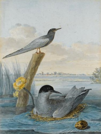 a pair of black terns with nest and egg in a river landscape by aert schouman