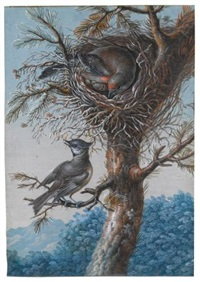 a greater redpoll and a crested tit; a bluethroat (2 works) by christoph ludwig agricola