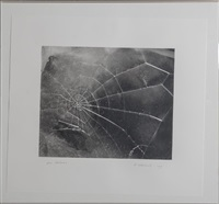spiderweb, for lincoln center/list art program by vija celmins
