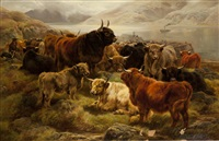 highland cattle by william r.c. watson