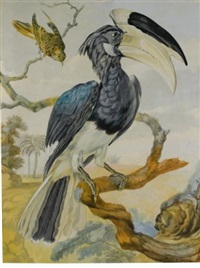 a hornbill and another bird on a branch by aert schouman