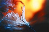 fleur by claire artemyz