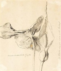 study of a kala by johan thomas lundbye