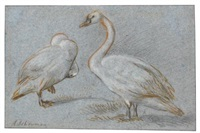 a pair of standing swans, one preening by aert schouman