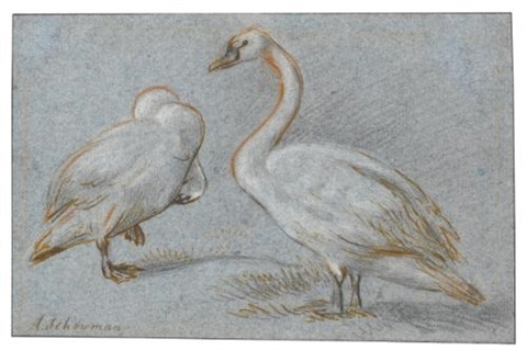 a pair of standing swans one preening by aert schouman