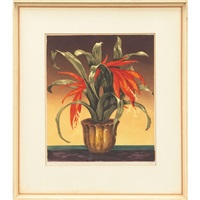 bromelia by hugo noske