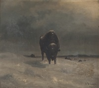 buffalo leading a herd by astley david middleton cooper