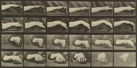 animal locomotion plate 532 by eadweard muybridge