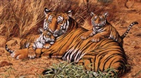 tigress with cubs - tiger's pride by steven l. adams