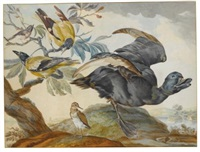 a duck and four other birds, three on a branch by aert schouman