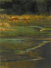impala at the watering hole by kim donaldson