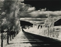 road and poplar trees by minor white