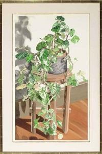 trailing begonia by sondra freckelton