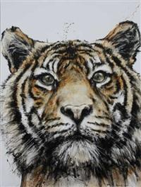tigre by franck lesieur