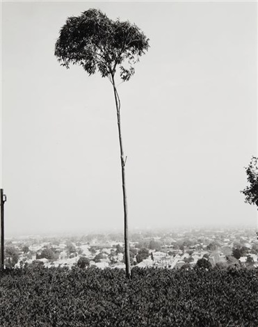on signal hill overlooking long beach california by robert adams