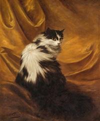 schwarzweiße katze vor rotem vorhang by carl kahler