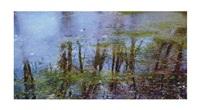spring (from the silence series) by shahram karimi and shoja azari
