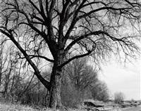 cottonwood, edge of development, longmont, colo by robert adams