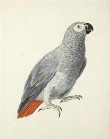 a parrot by aert schouman
