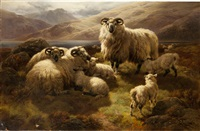 highland sheep by william r.c. watson