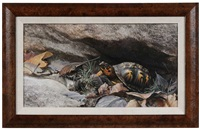 box turtle by bob henley