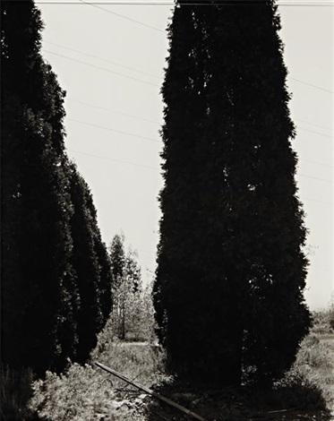 abandoned ornamental cypress, rancho cucamonga, california by robert adams