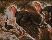 dindons et oiseaux by h. lehure