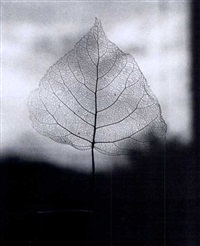 skeleton leaf by olive cotton