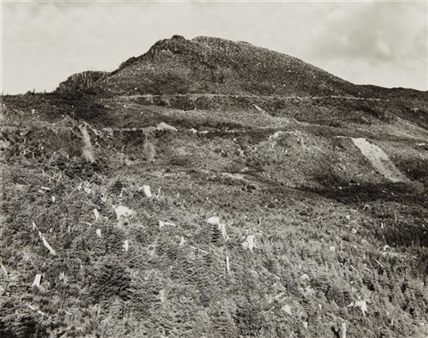 clear cut and burned east of arch cape oregon by robert adams