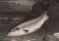 a study of a salmon by charles forster