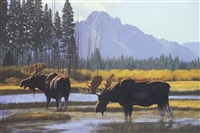 moose country by don rodell