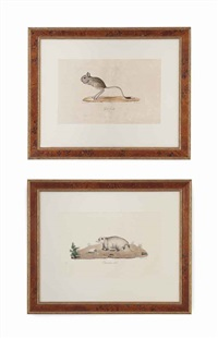 untitled (from l'histoire naturelle des mammiferes) (10 works) by étienne geoffroy st. hilaire
