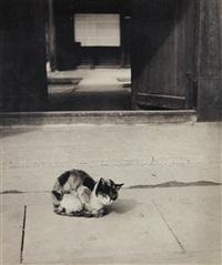 Cat, 1930–1939