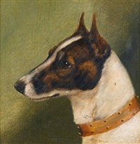 head of a fox terrier by edward aistrop