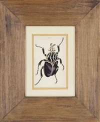 untitled (entomological study) (from the naturalist's library) (+ 17 others; 18 works) by william (sir) jardine (editor)