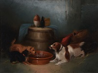 terriers and spaniel by george armfield