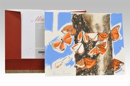 mariposas monarca portfolio by carmen parra