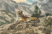 a caspian tiger lying on a rock below the elburz mountains, northern iran by willem de beer