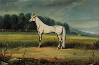 portrait of a white horse by augustus langwig