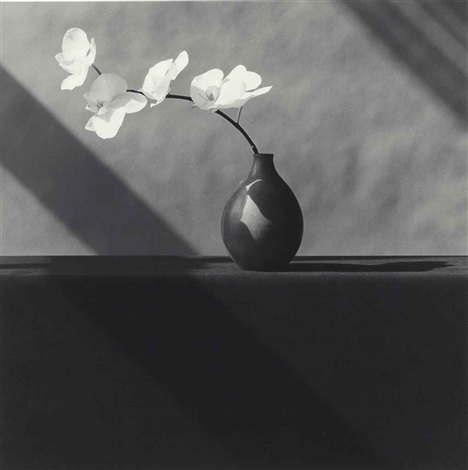 white long stem orchid by robert mapplethorpe