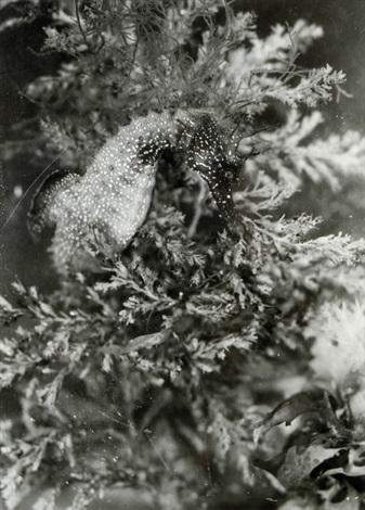 hippocampe dans les algues by laure albin guillot