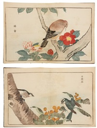 raikin zui - oiseaux étrangers (album w/ 22 works) by kitao masayoshi