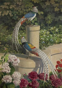 peacocks by julius moessel