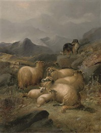 the well tended flock by john charles morris