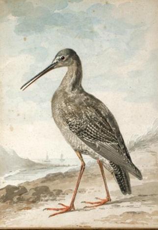 a redshank by aert schouman