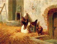 hens outside their pen by elchanon verveer