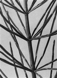 six studies of plants (6 works) by ernst fuhrmann