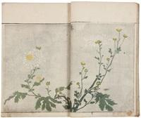 sôka ryakuga shiki - méthode de dessins rapides de fleurs et plantes (bk) by kitao masayoshi